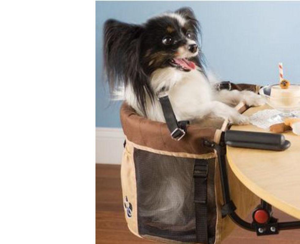 En stol till hunden som vill äta fint