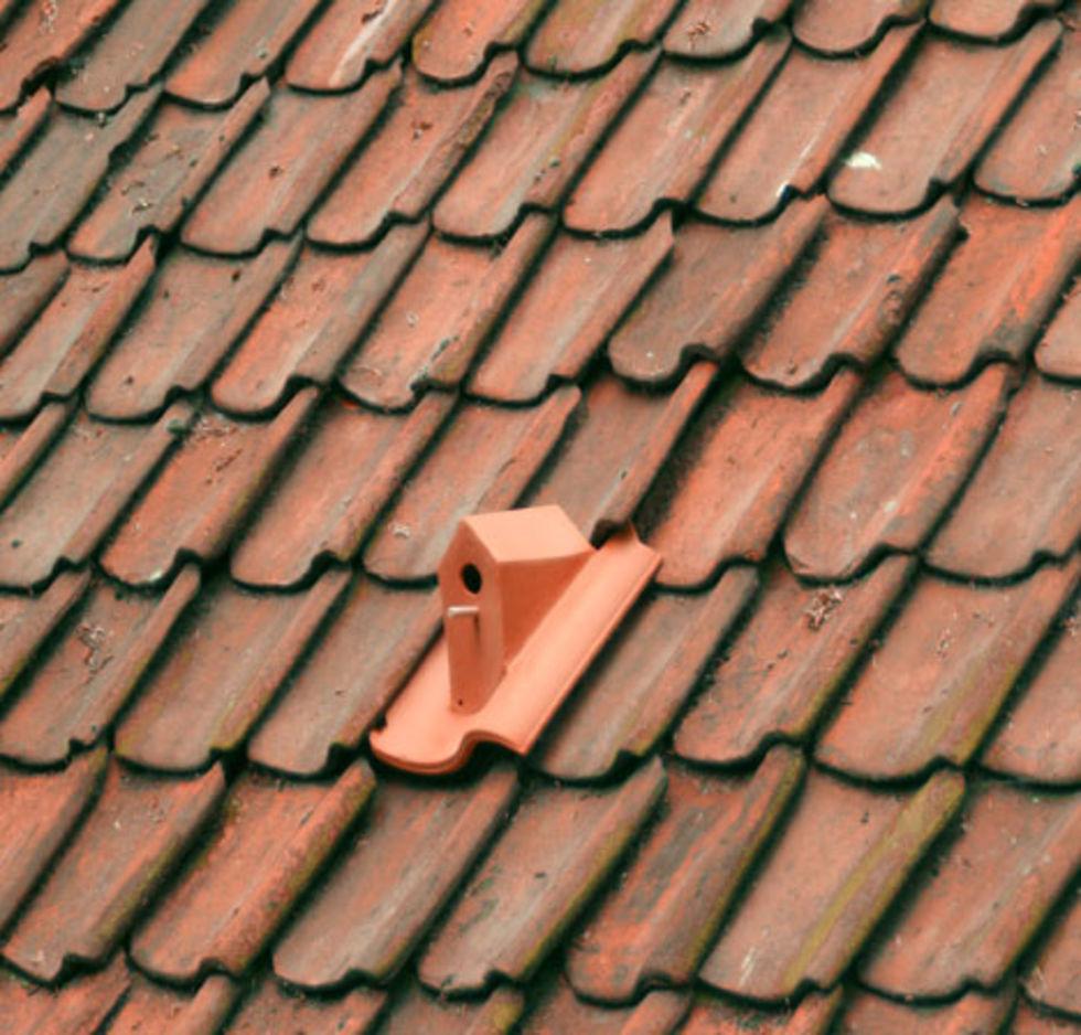 Ditt tak blir fåglarnas hem