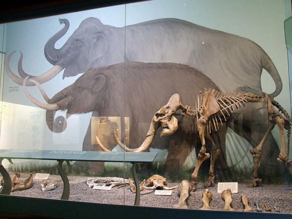 Forskare tror de kan återskapa en mammut