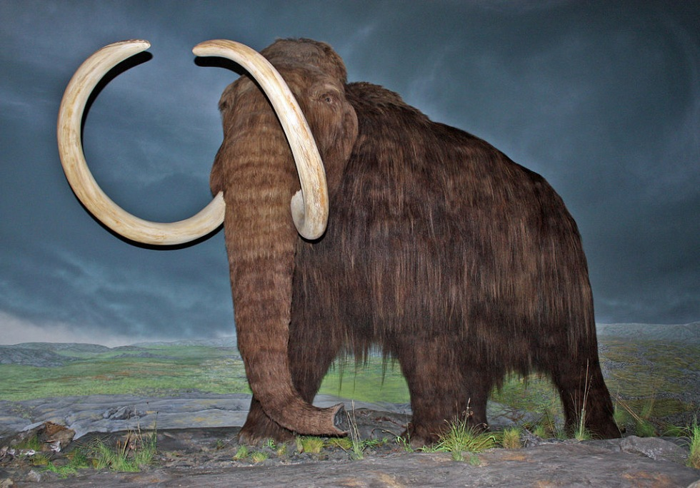 Mammut-kloning på gång