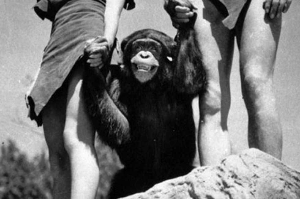 Schimpansen Cheetah har dött