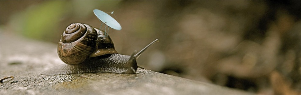 Undercover snail!