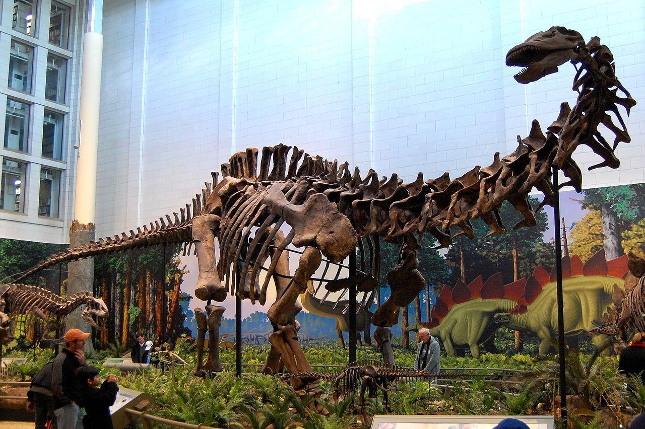 Brontosaurusen har aldrig funnits