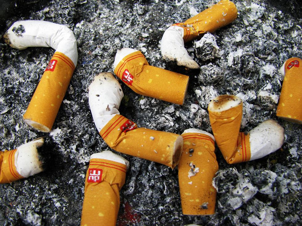 Fåglar bygger bon av cigarett-fimpar