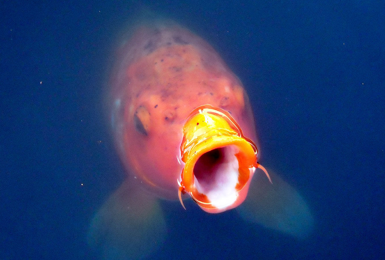 Fisk & Fri kräver Genusfotografen på pengar