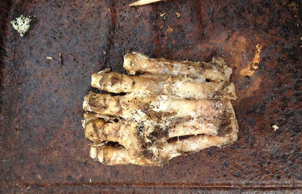 Bigfoots fot upphittad?