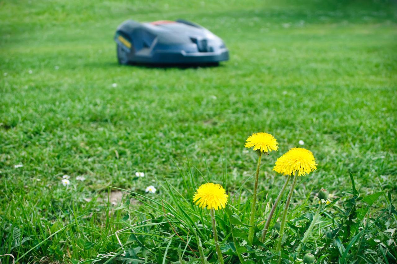Robotgräsklippare är det trädgårdsägare mest vill ha