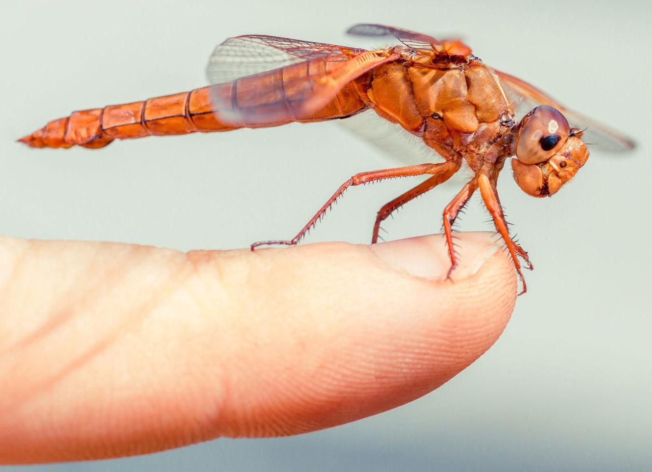 FN vill att vi ska äta mer insekter