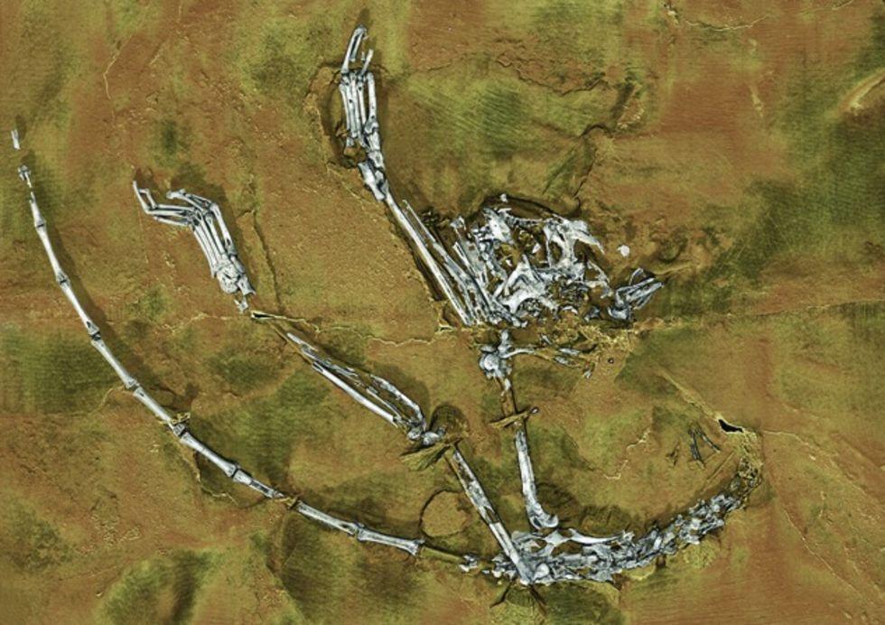 Äldsta fossil av primat-skelett hittat i Kina