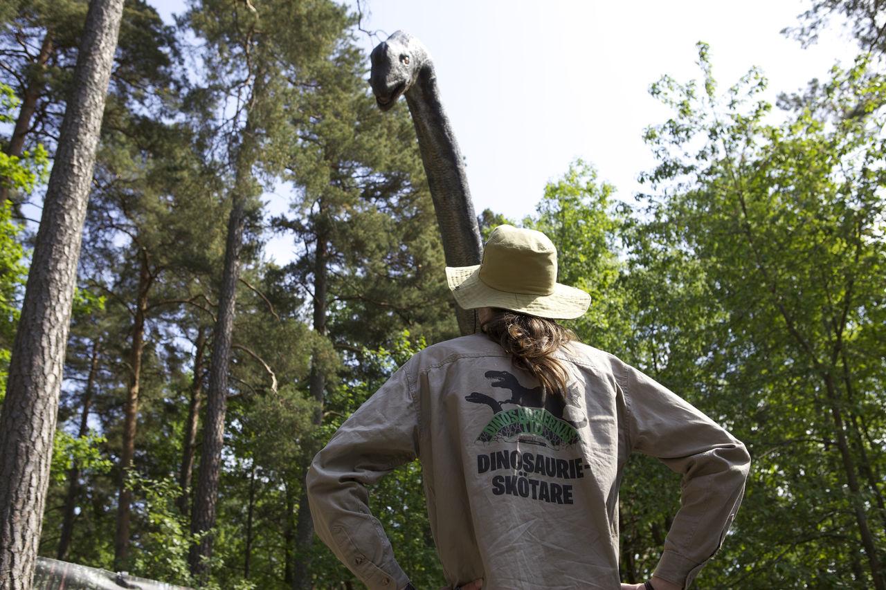 Häftigt sommarjobb: Dinosaurieskötare