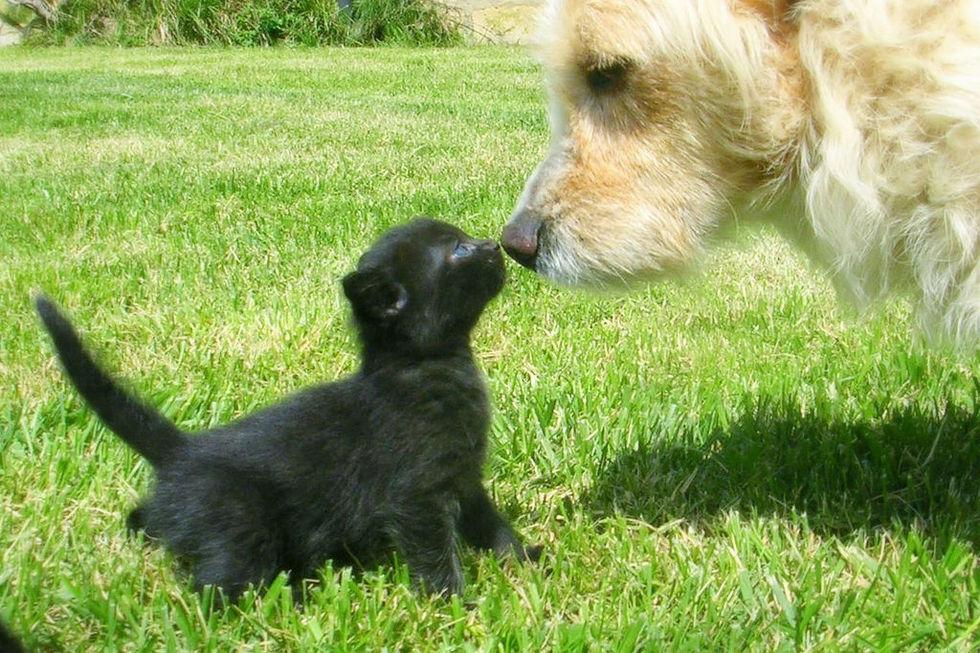 Hundblod räddade katt