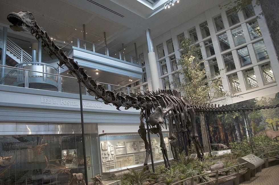 Diplodocus-skelett sålt på auktion