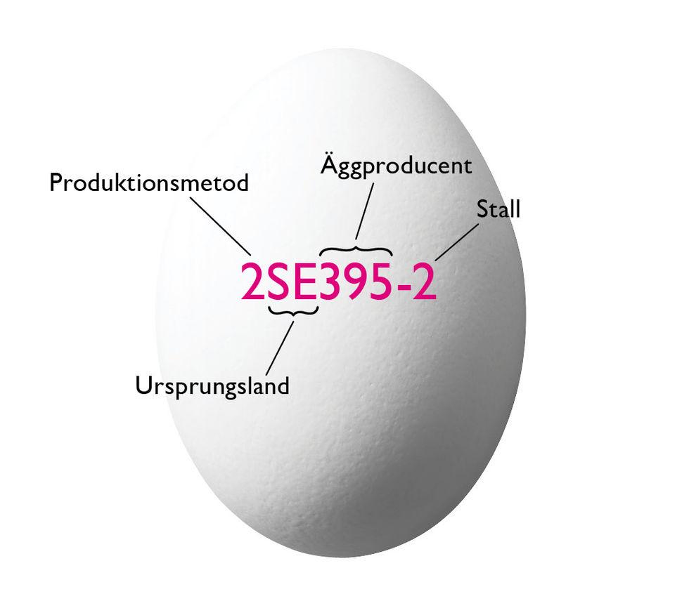 Äggstatistik