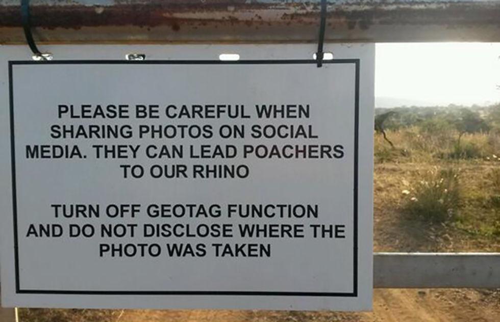 Tjuvskyttar använder geotaggade bilder för att hitta noshörningar
