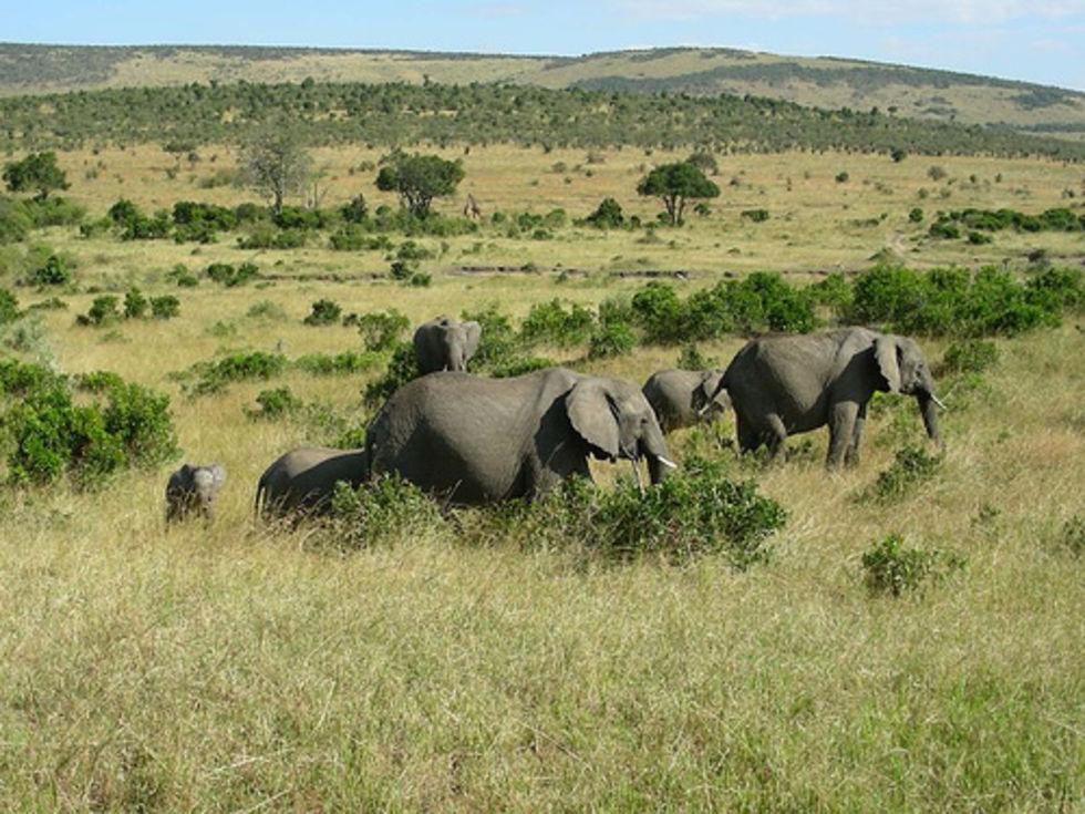 Elefanthjord upptäckt på ö i Sudan
