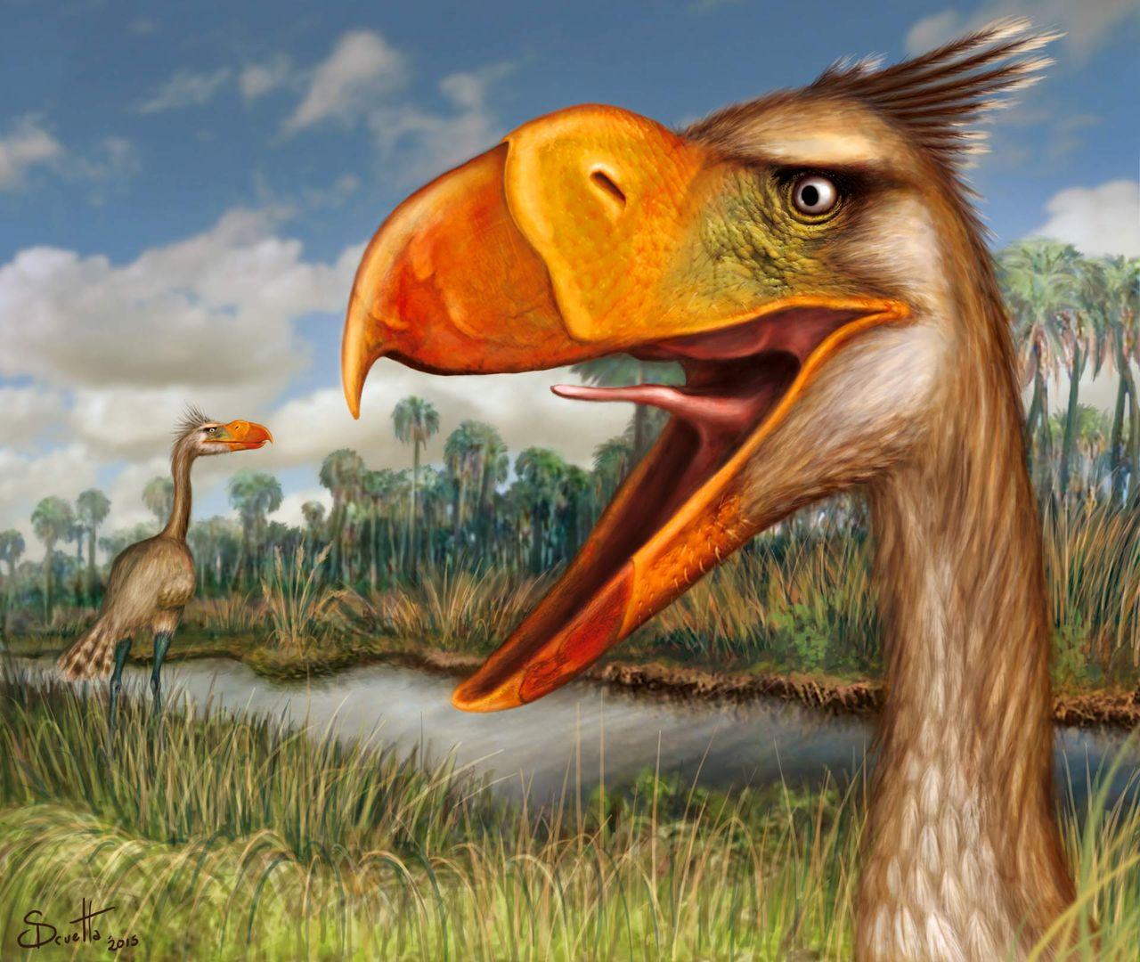 Utdöd fågelart upptäckt i Argentina