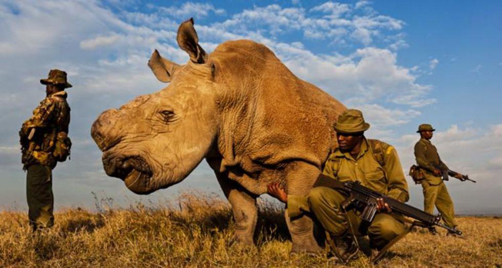 Noshörningen Sudan får  livvakter