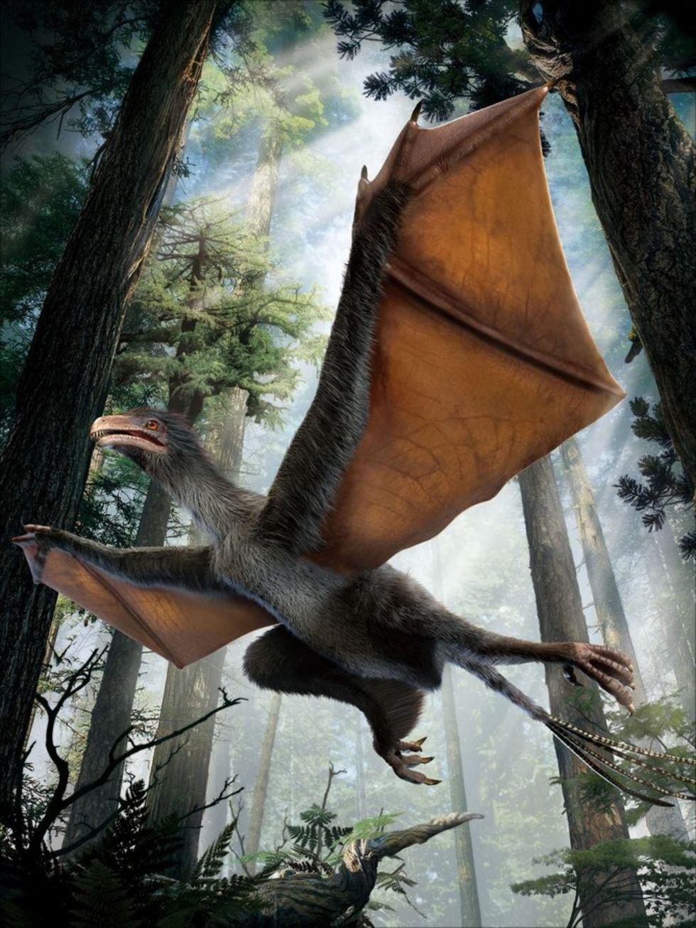 Flygande dinosaurie upptäckt i Kina