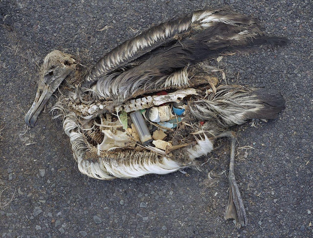 Plast fyller haven miljoner ton slangs