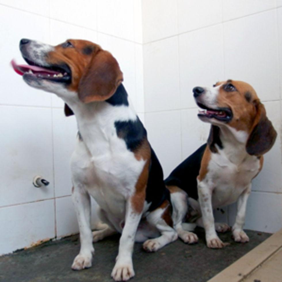 Kina tar fram genmanipulerade hundar