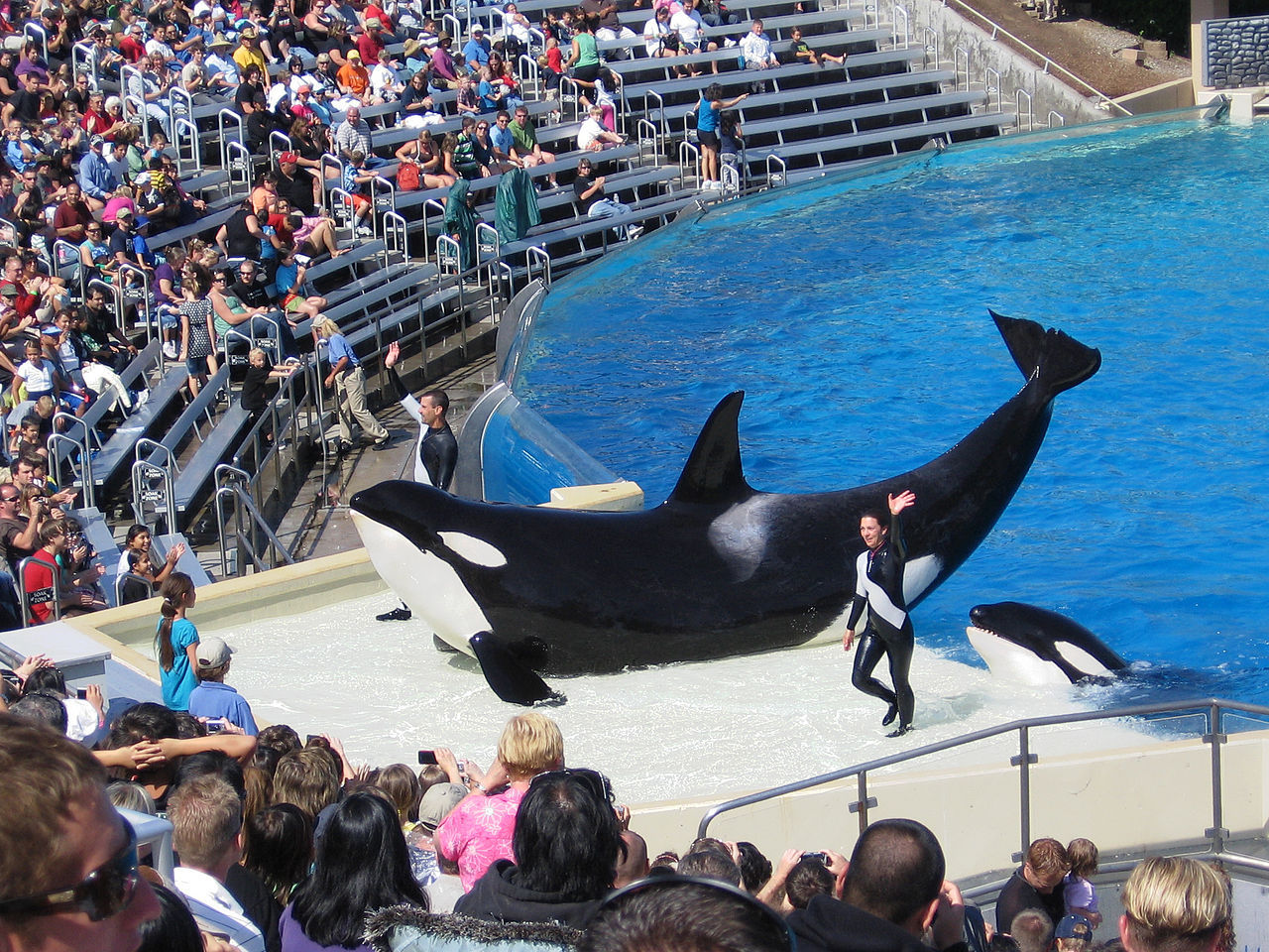 SeaWorld San Diego slutar med späckhuggarshower