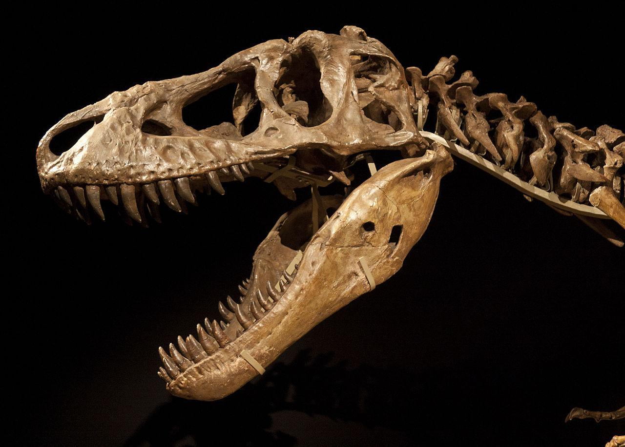 Nicholas Cage lämnar tillbaka dinosaurieskalle till Mongoliet