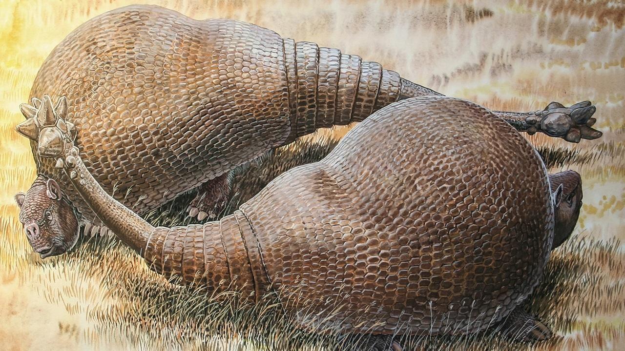 Doedicurus var ett jättelikt bältdjur