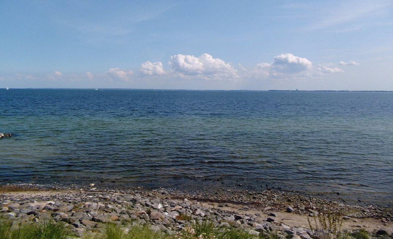 Svensk studie visar att fiskyngel föredrar plast