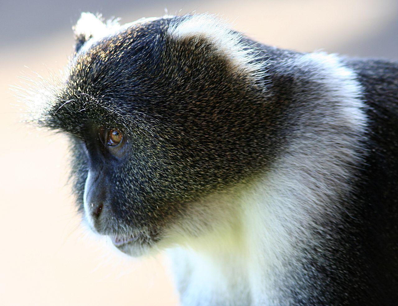 Apa släckte ner hela Kenya