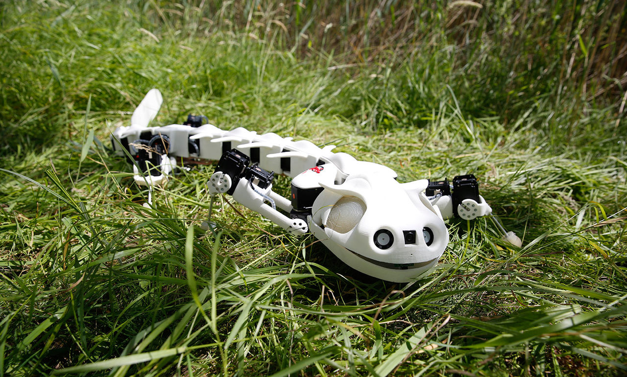 Robotsalamander rör sig som en riktig salamander