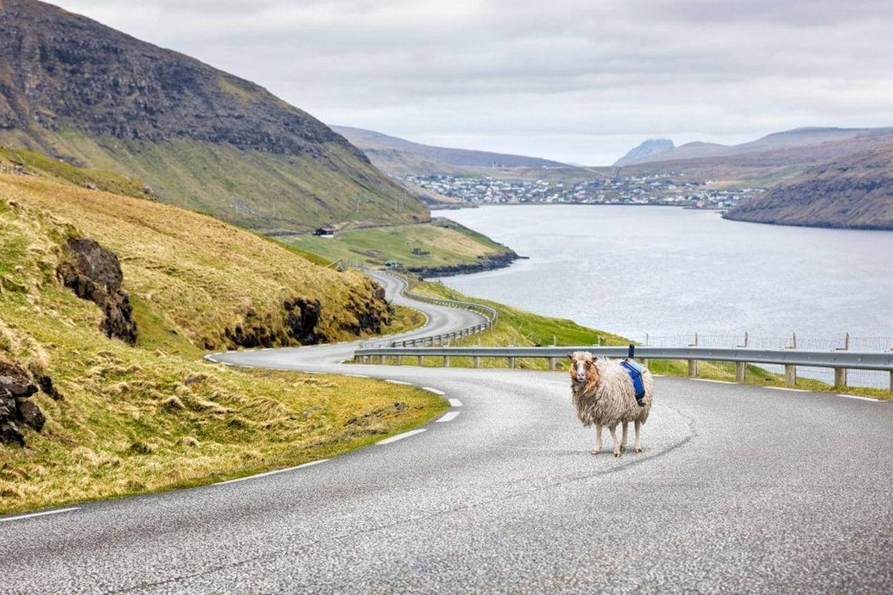 Färöarna drar igång Sheep View