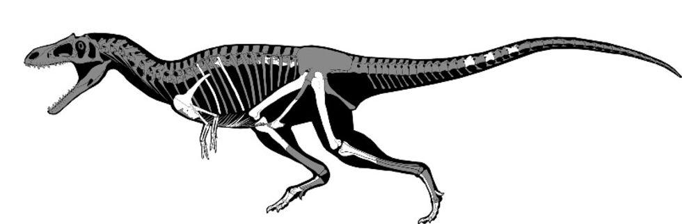 Ny dinosaurie-art upptäckt i Argentina