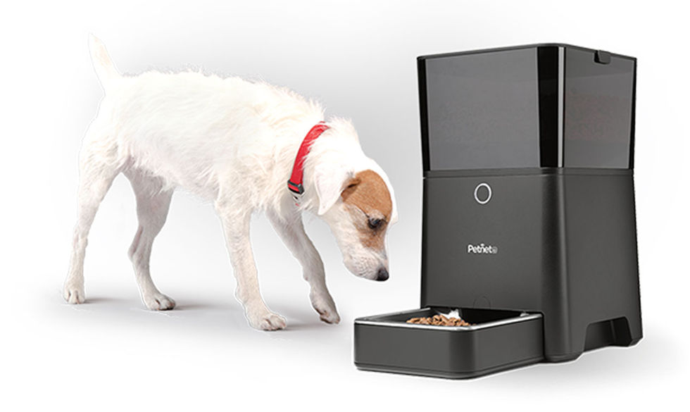 Husdjursmatare som var uppkopplad mot nätet fick serverproblem