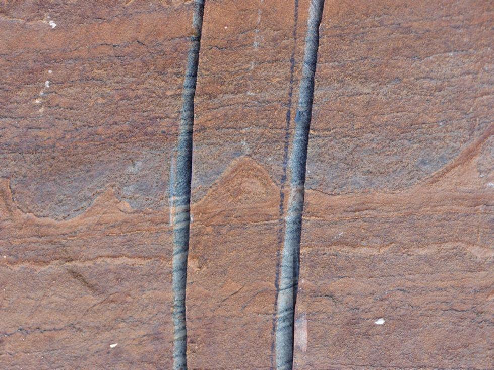 Världens äldsta fossil hittad på Grönland