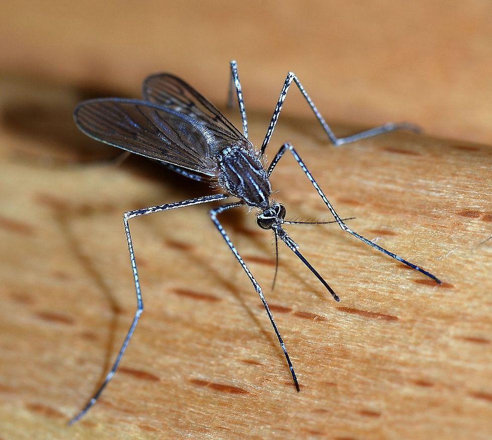 Myggan den djurart som dödade flest människor förra året