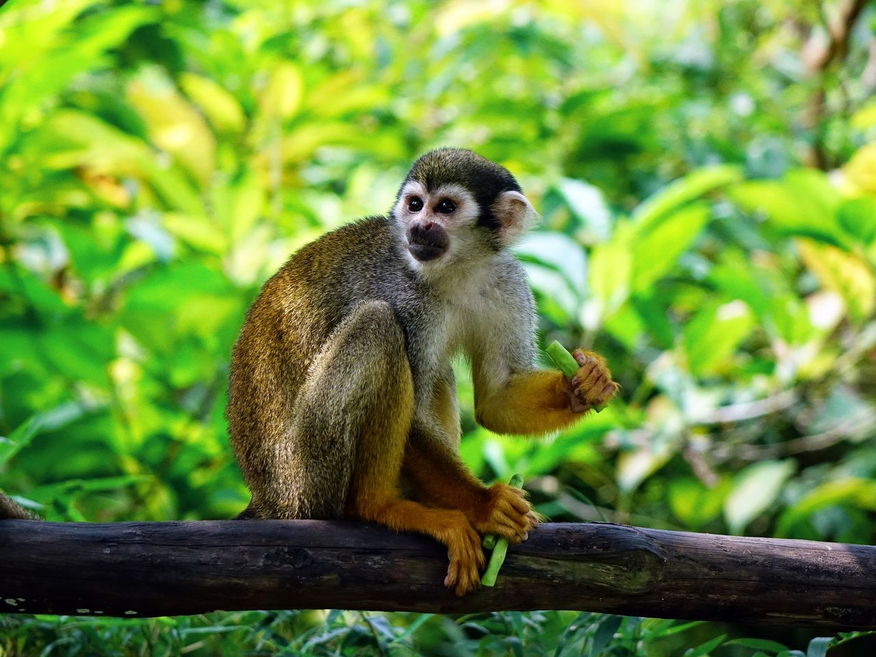 Forskare har lyckats få förlamade apor att gå igen