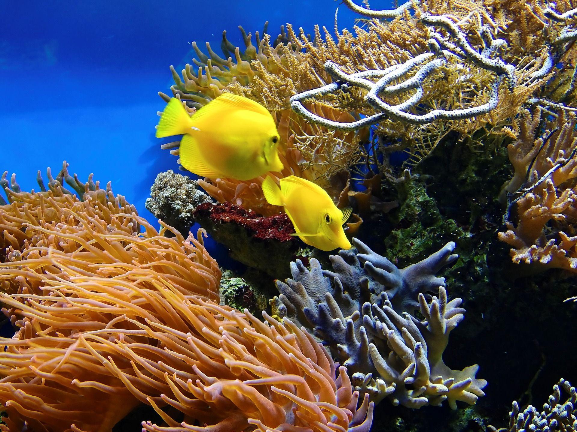 Australien vill inte att Barriärrevet ska dö ut