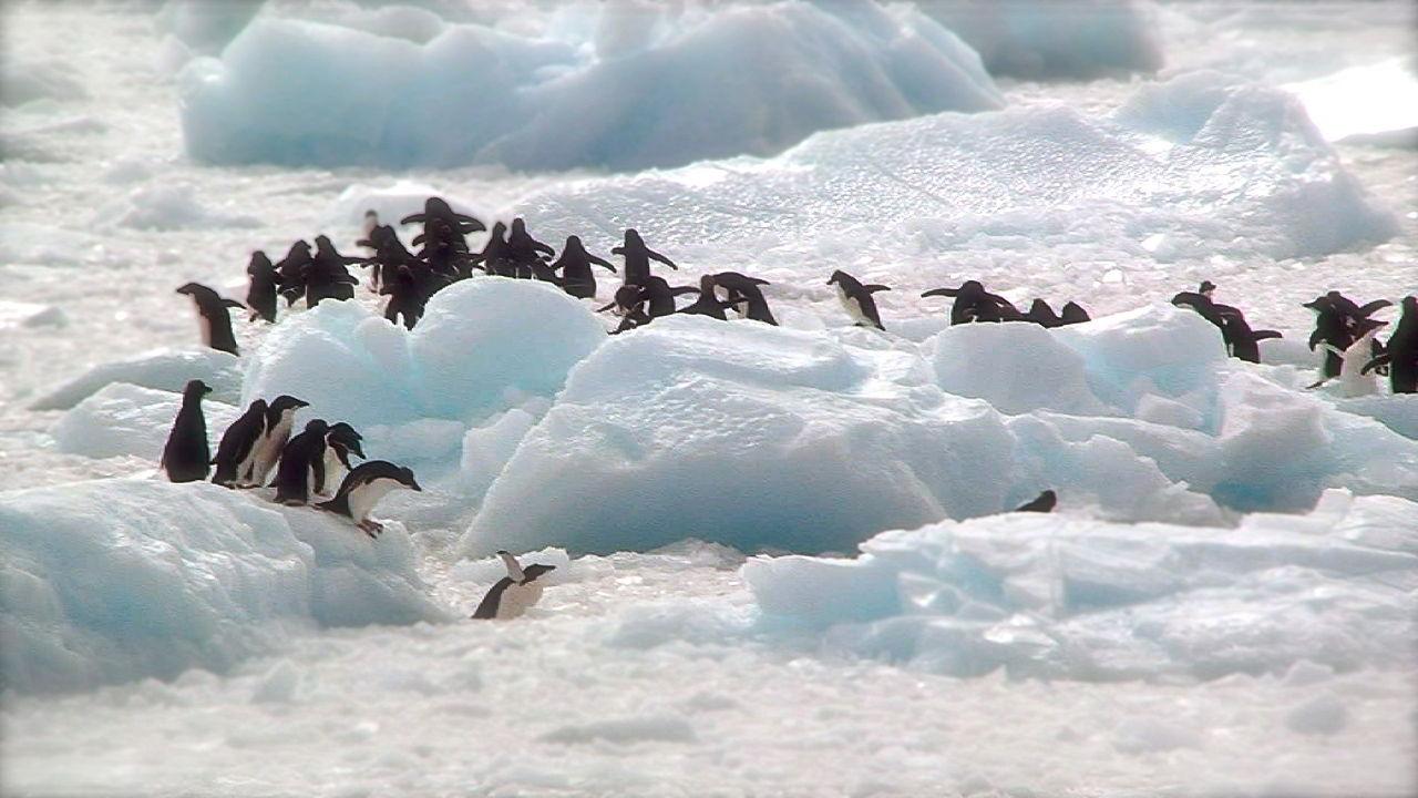 Obama förbjuder oljeborrning i Arktis och på Antarktis