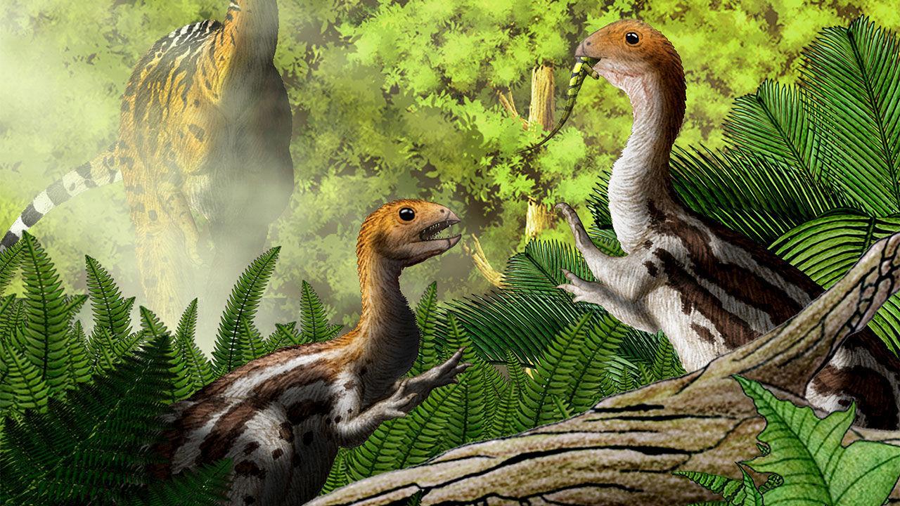 Limusaurus var en dinosaurie som blev tandlös som vuxen