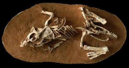 Två sätt dating fossil förklara både