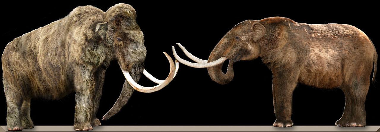 Snart kanske mammutar vandrar på jorden igen
