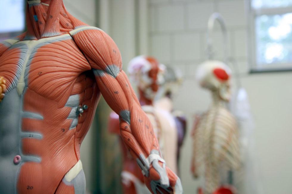 Forskare vill odla mänsklig vävnad på robotar