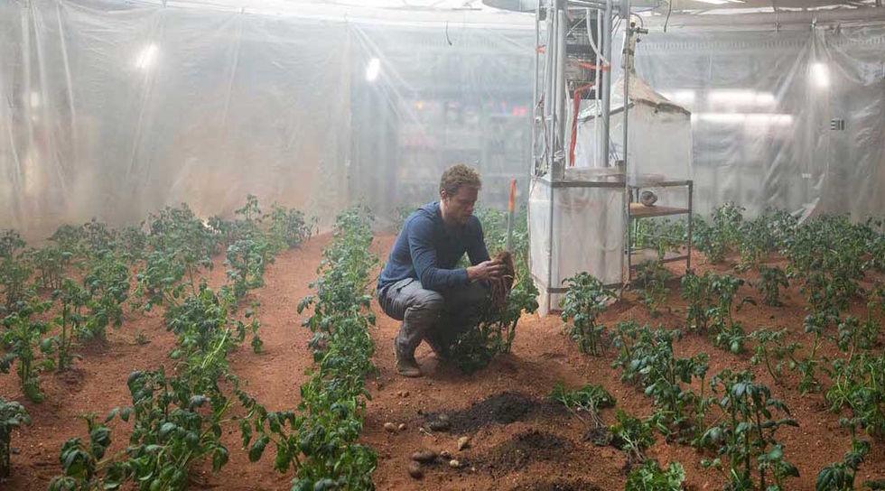 Det kanske går att odla potatis på Mars