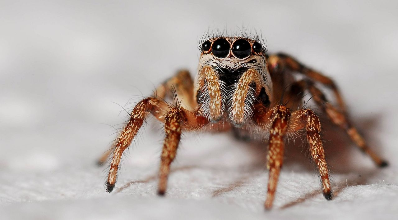 Forskare har upptäckt 50 nya spindelarter
