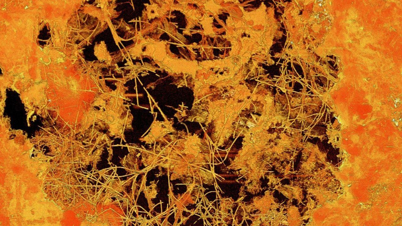 Fossil svampliknande organism hittad i lavastenar