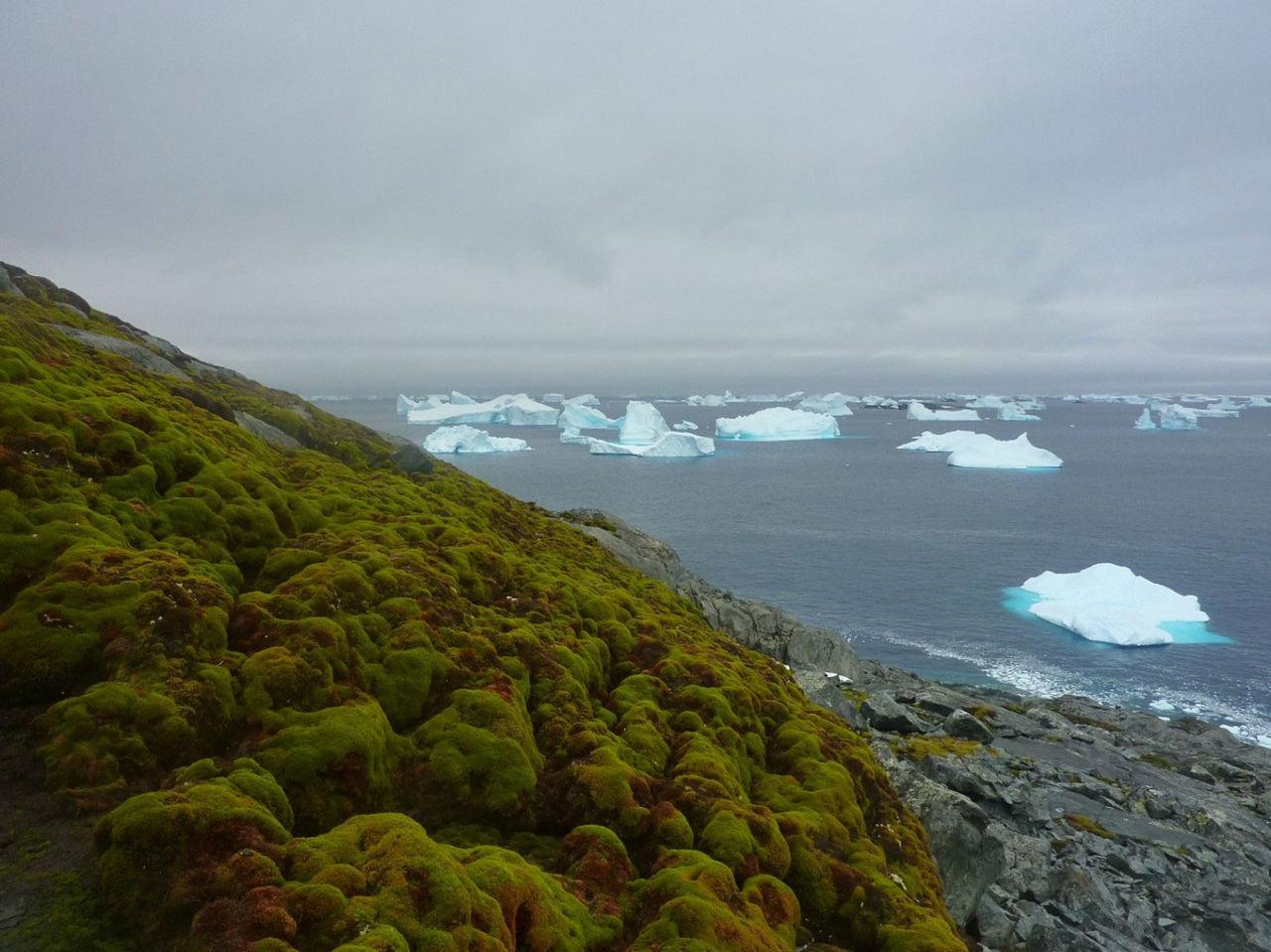 Klimatförändringar gör Antarktis grönare