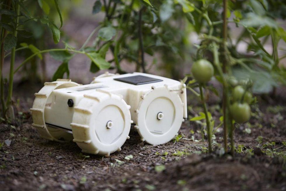Tertill är en robot som rensar rabatten från ogräs