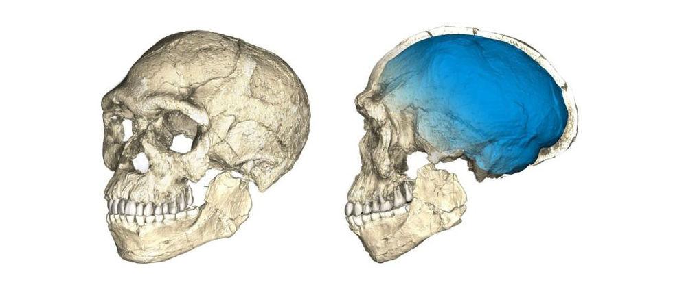 definiera relativ datering av fossil