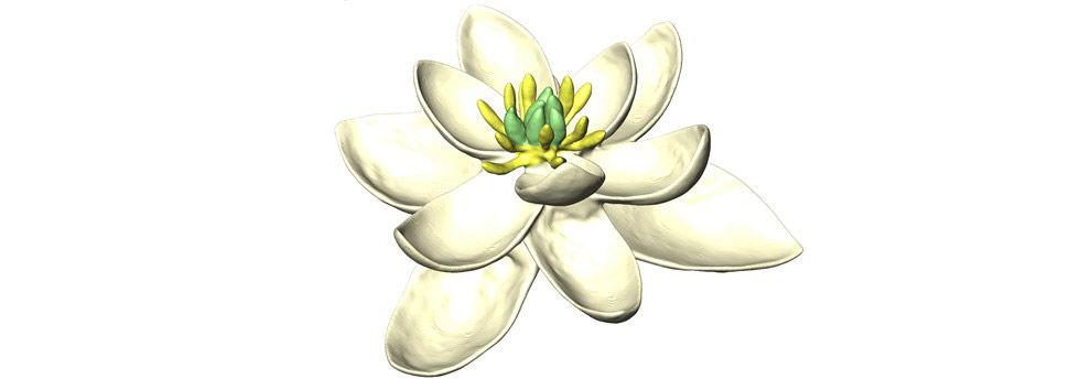 Så här kan världens första blomma ha sett ut