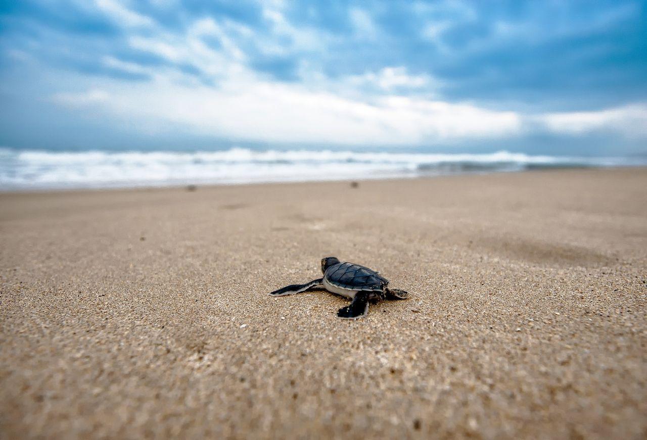 Antalet sköldpaddor i världen ökar